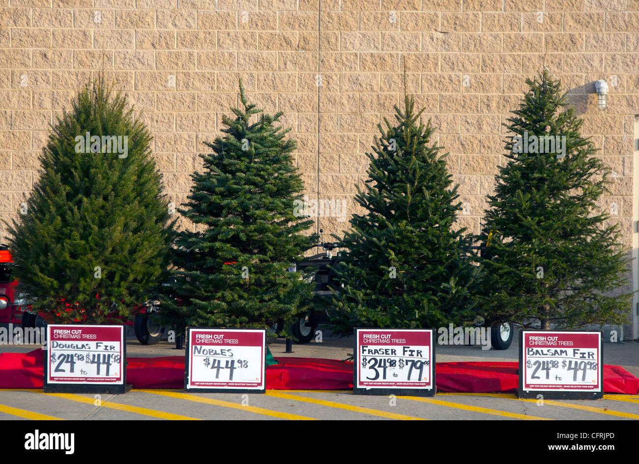 Weihnachtsbaume verschiedene arten