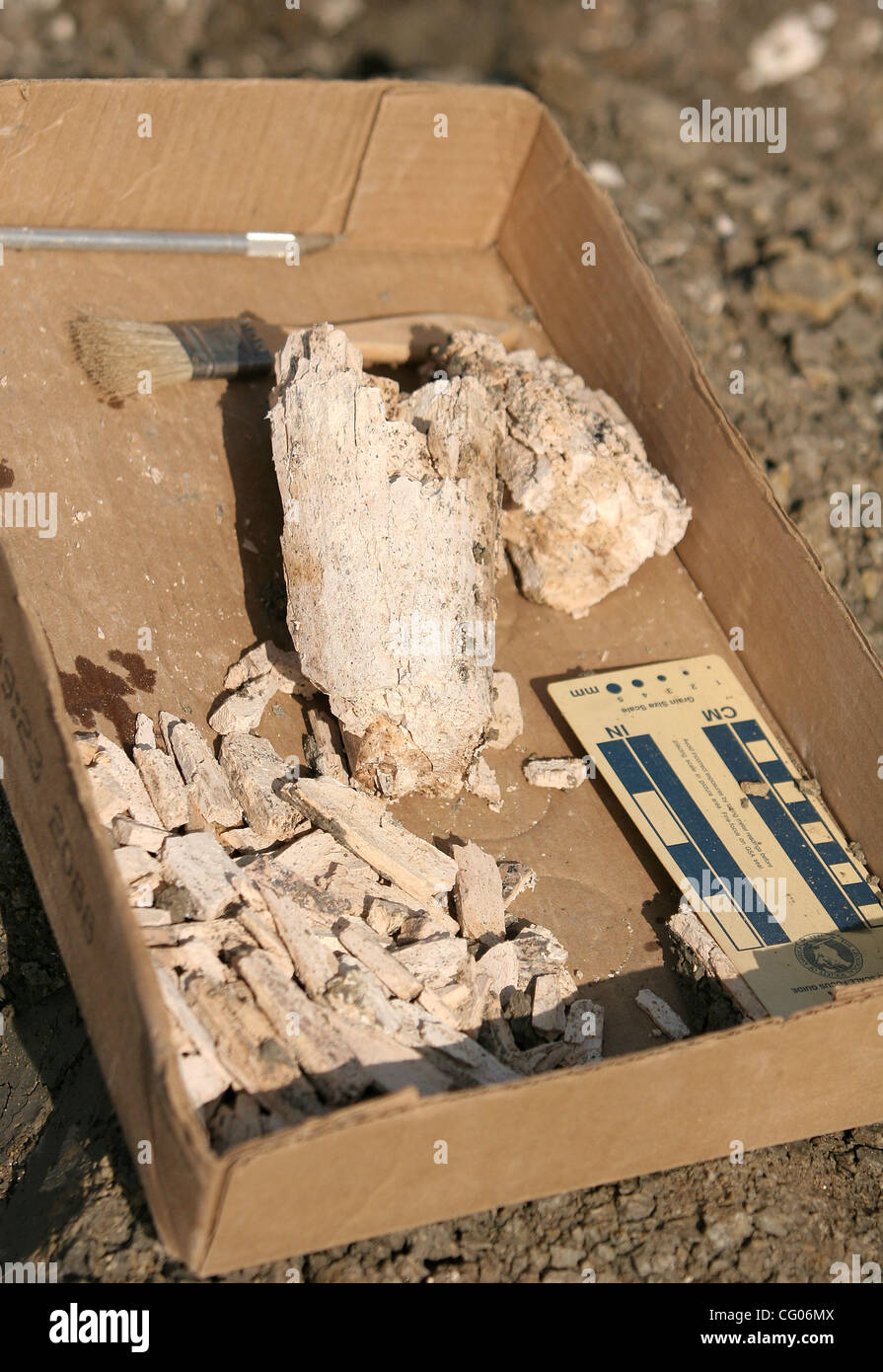 Donnerstag, 14. Juni 2007, Carlsbad, Kalifornien, Fragmente von einer amerikanischen Mastodons ausgegraben von einem Stockbild