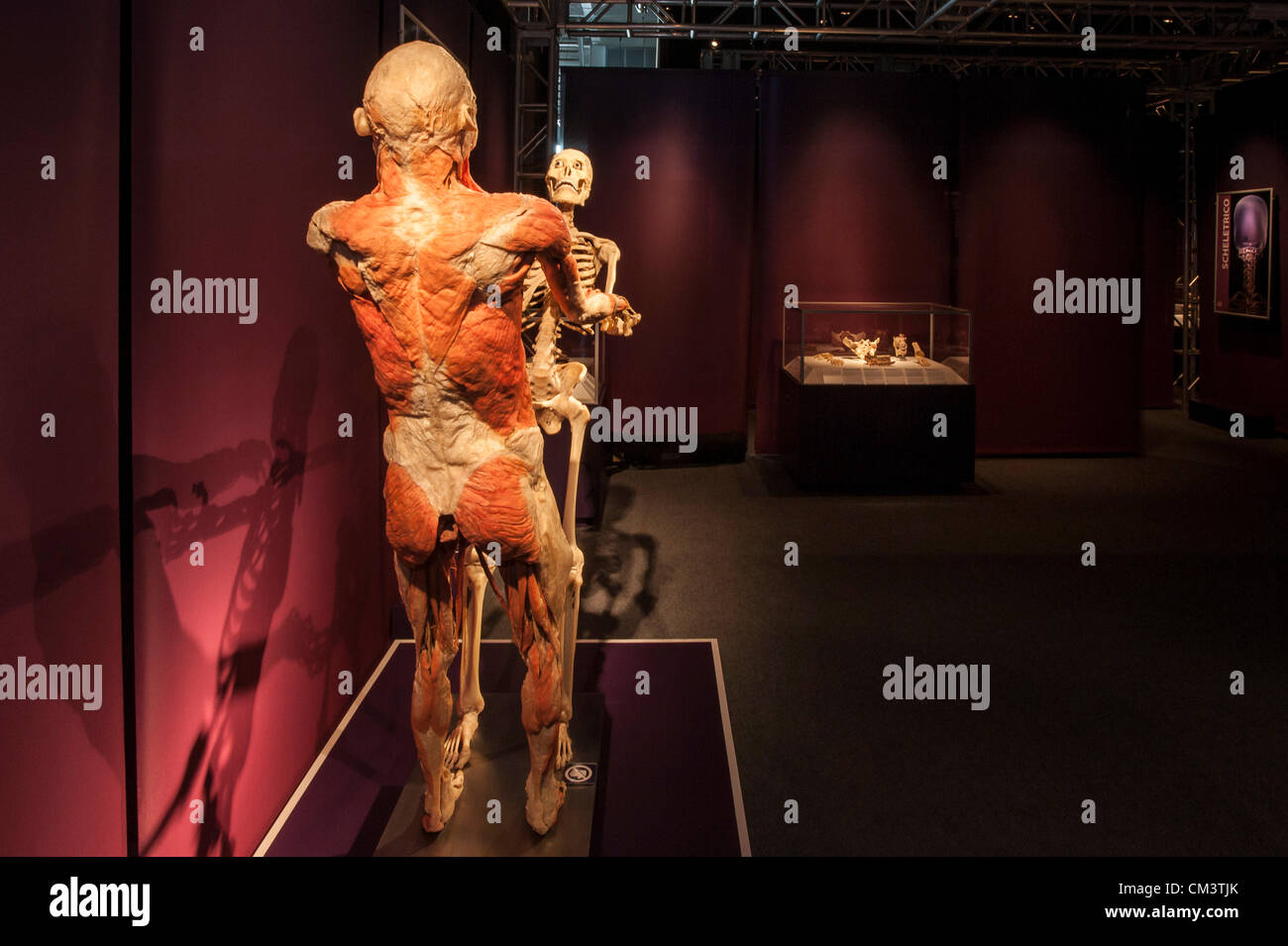 Body Organs Stockfotos & Body Organs Bilder - Alamy