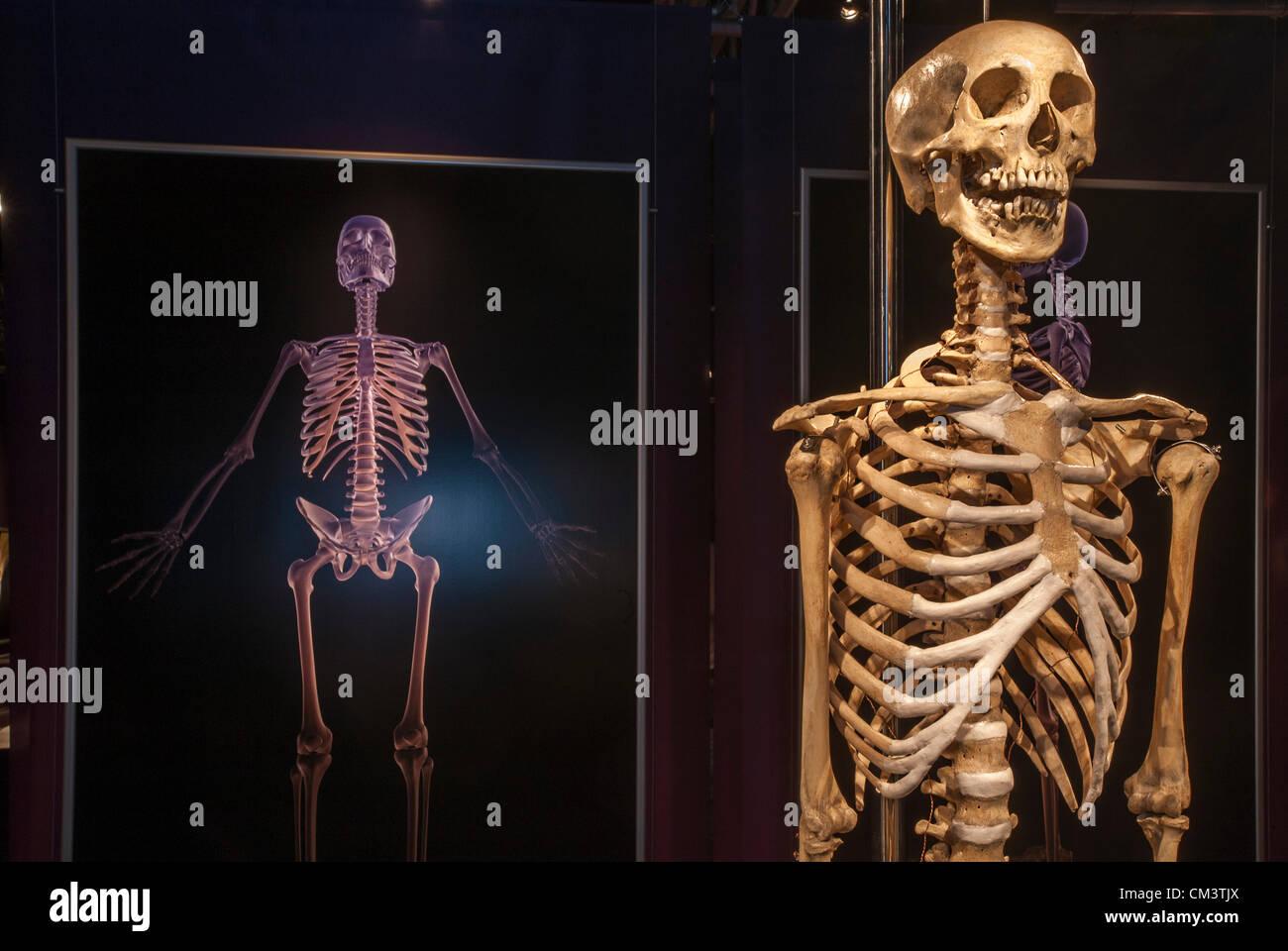 Großartig Knochen Des Körpers Diagramm Bilder - Menschliche Anatomie ...