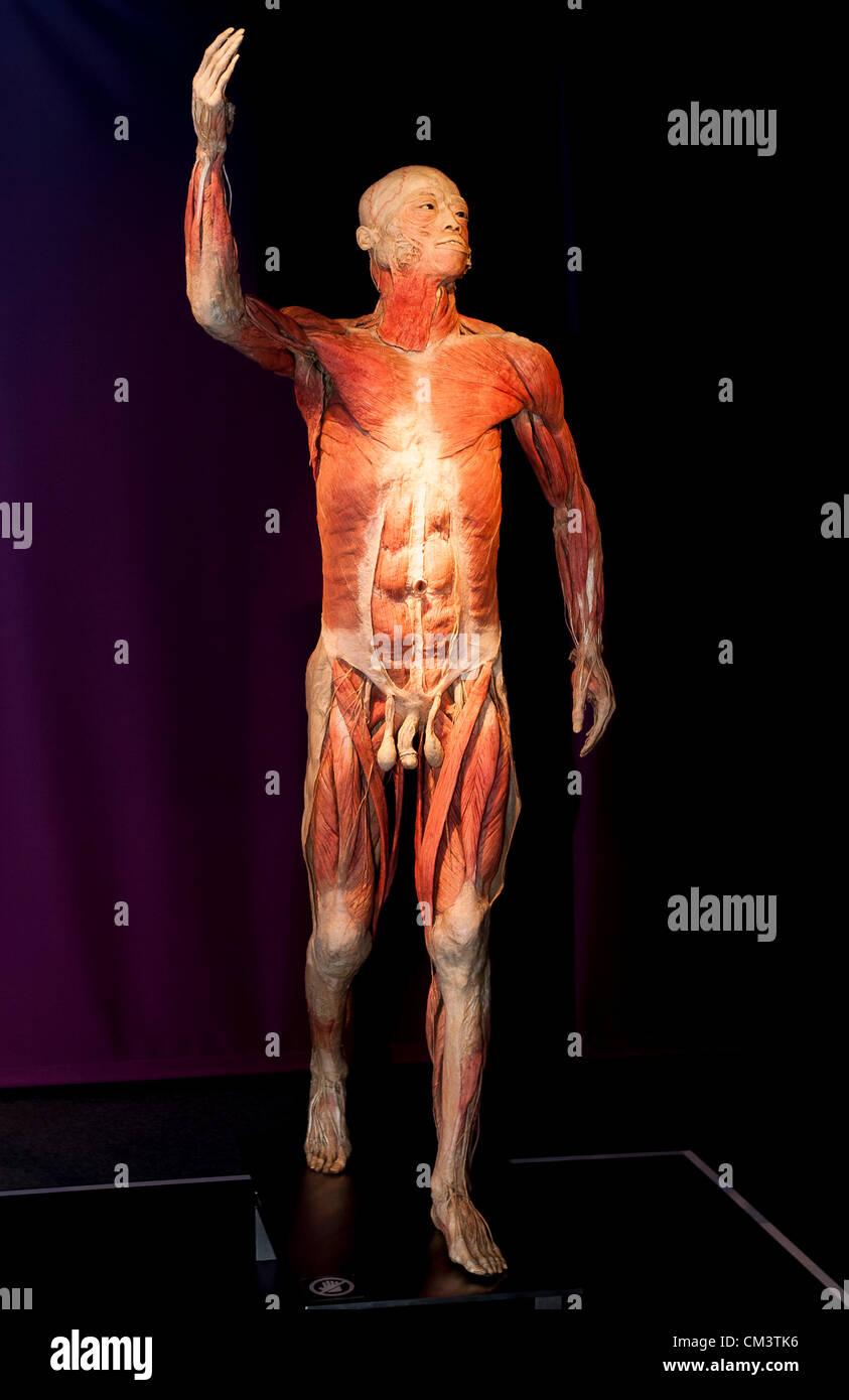 Nett Nennen Sie Die 206 Knochen Im Menschlichen Körper Bilder ...