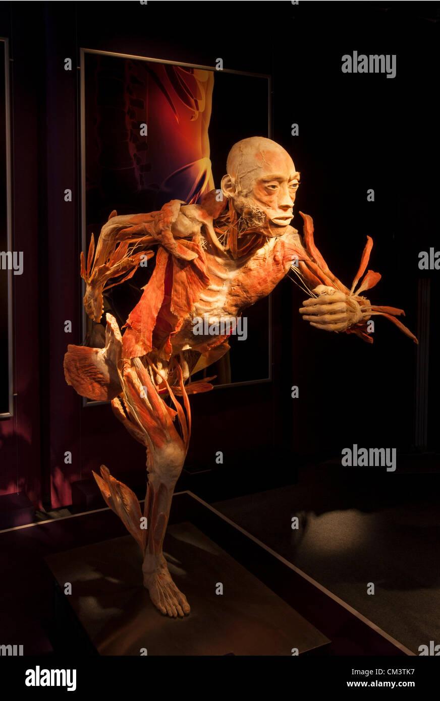 Ungewöhnlich Menschliche Anatomie Knochen Und Muskeln Zeitgenössisch ...