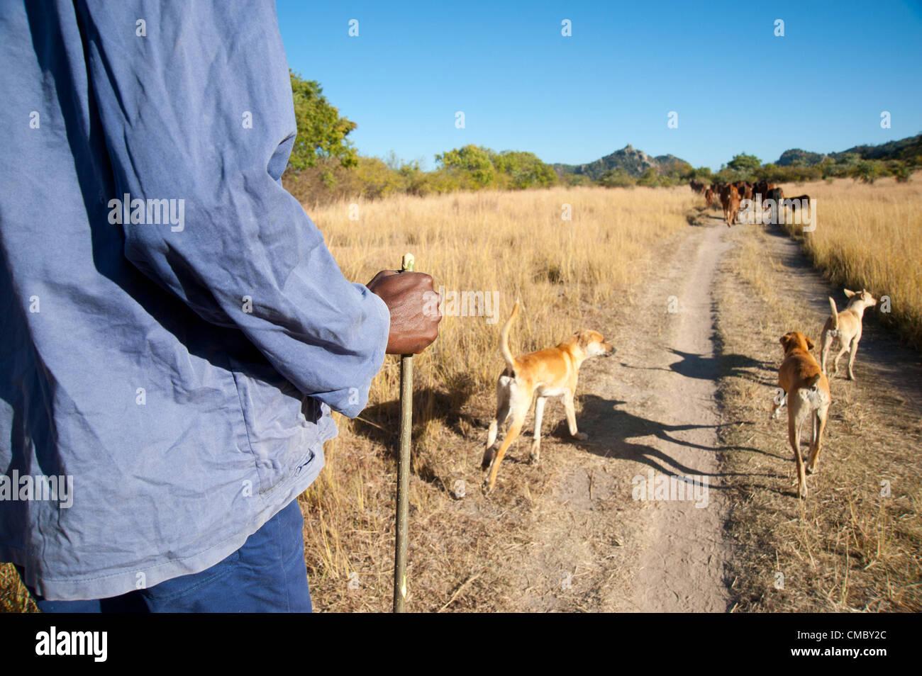 5. Juni 2012 - Lushumbe (Dorf, Simbabwe - 5. Juni 2012, Matobo, Simbabwe - ein Rinder-Besitzer und Preis (Förderung Stockbild