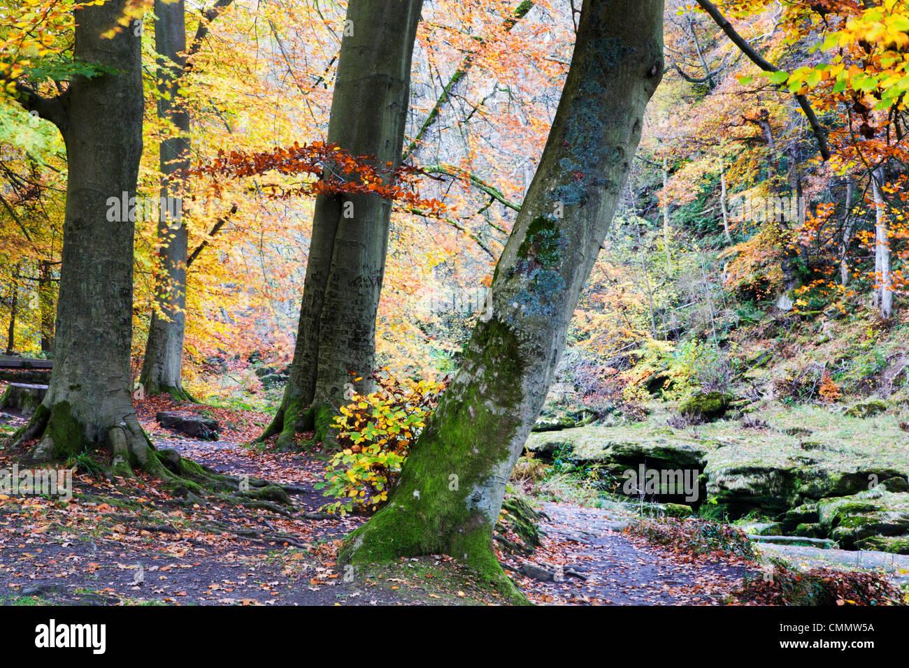 Herbstliche Bäume durch die Strid in Strid Wood, Bolton Abbey, Yorkshire, England, Vereinigtes Königreich, Stockbild