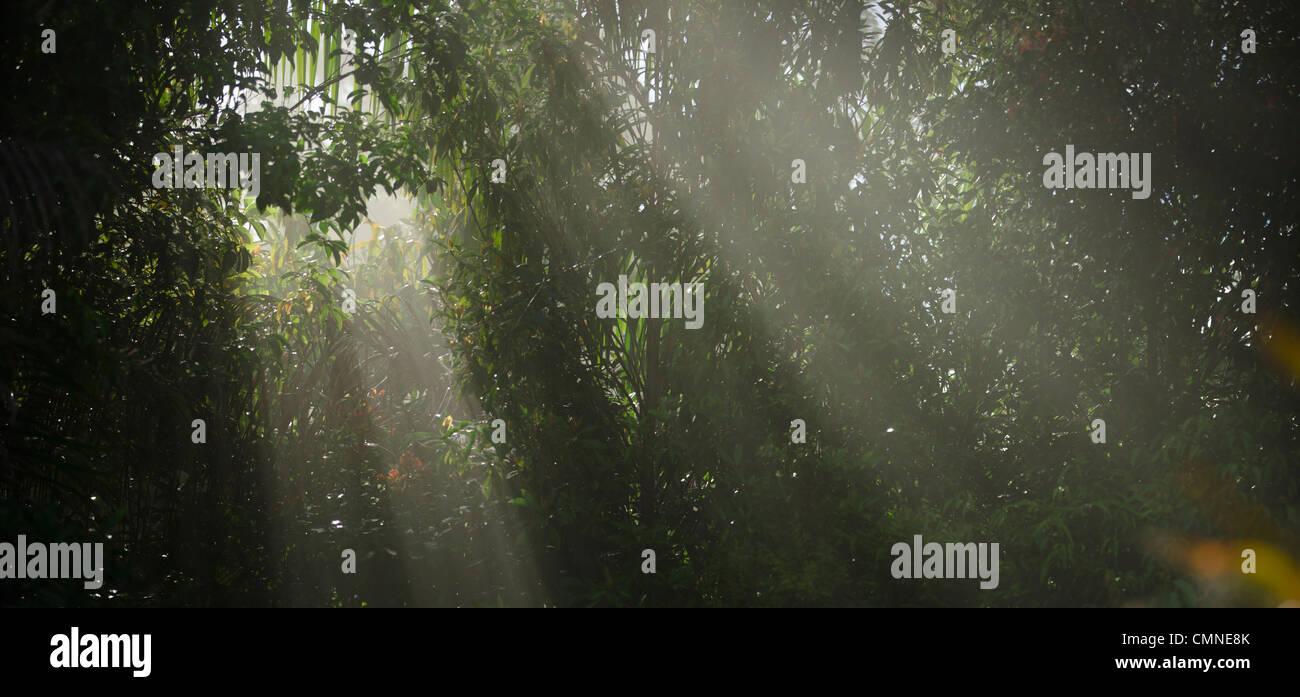 """Sonnenstrahlen durchdringen einen Schleier von Laub. Dipterocarp Tieflandregenwald, Maliau Basin - Sabahs """"Lost Stockbild"""