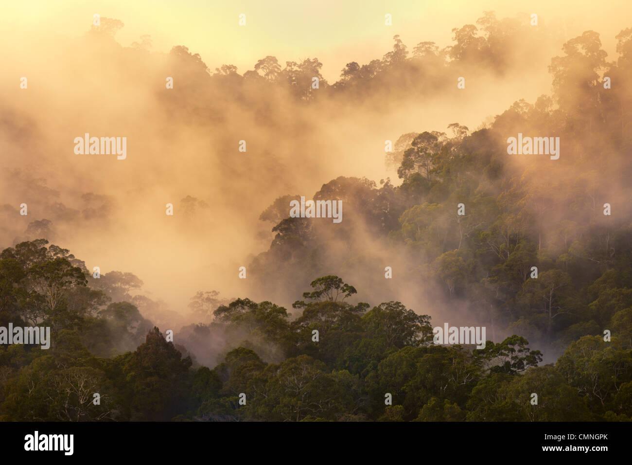 Regenwald im Morgengrauen, Maliau Basin, Sabah, Borneo, Malaysia. Mai. Stockbild