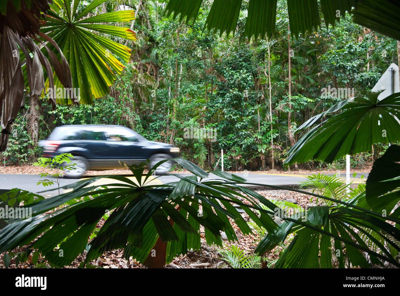 Auto fahren auf Regenwald Straße im Daintree Nationalpark, Queensland, Australien Stockbild