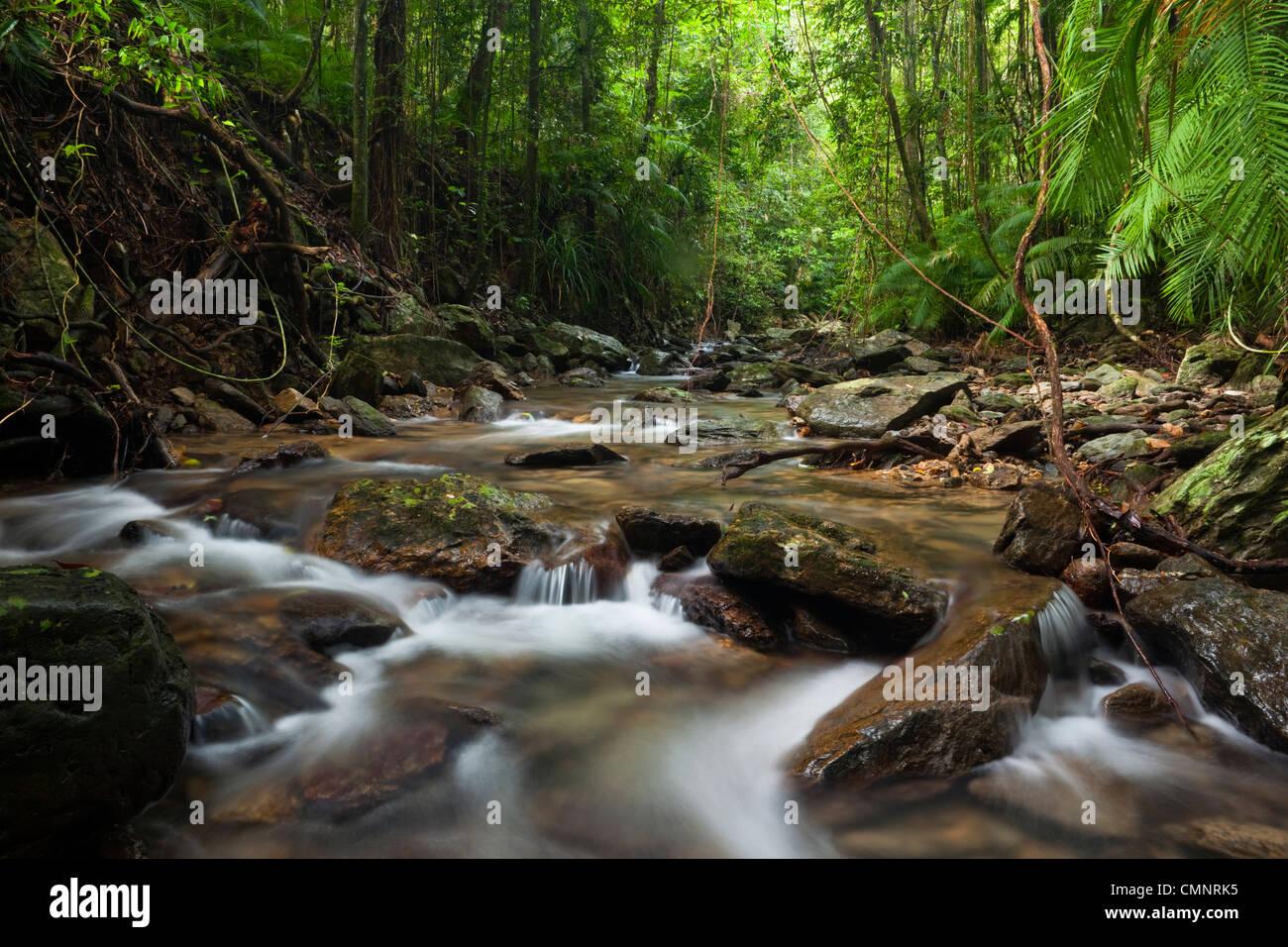 Regenwald-Bach an Crystal Cascades - eine beliebte Süßwasser Swimming-Loch in der Nähe von Cairns, Stockbild