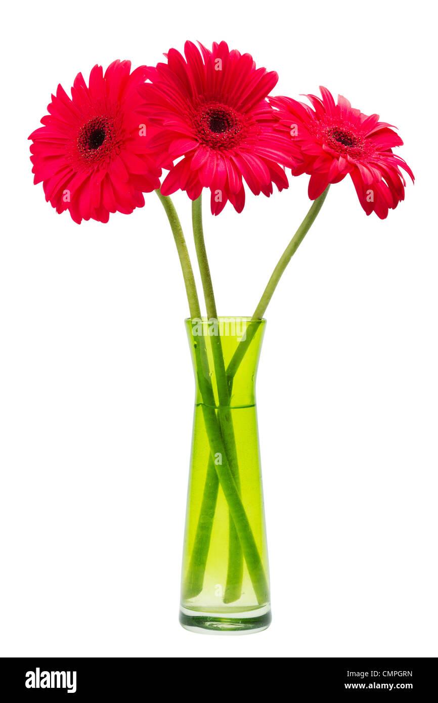 drei gerber blumen rote gerbera daisies in gr ne vase isoliert auf weiss stockfoto bild. Black Bedroom Furniture Sets. Home Design Ideas