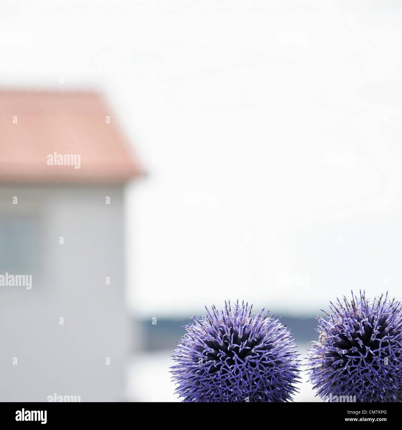 Nahaufnahme der Blumen im freien Stockbild
