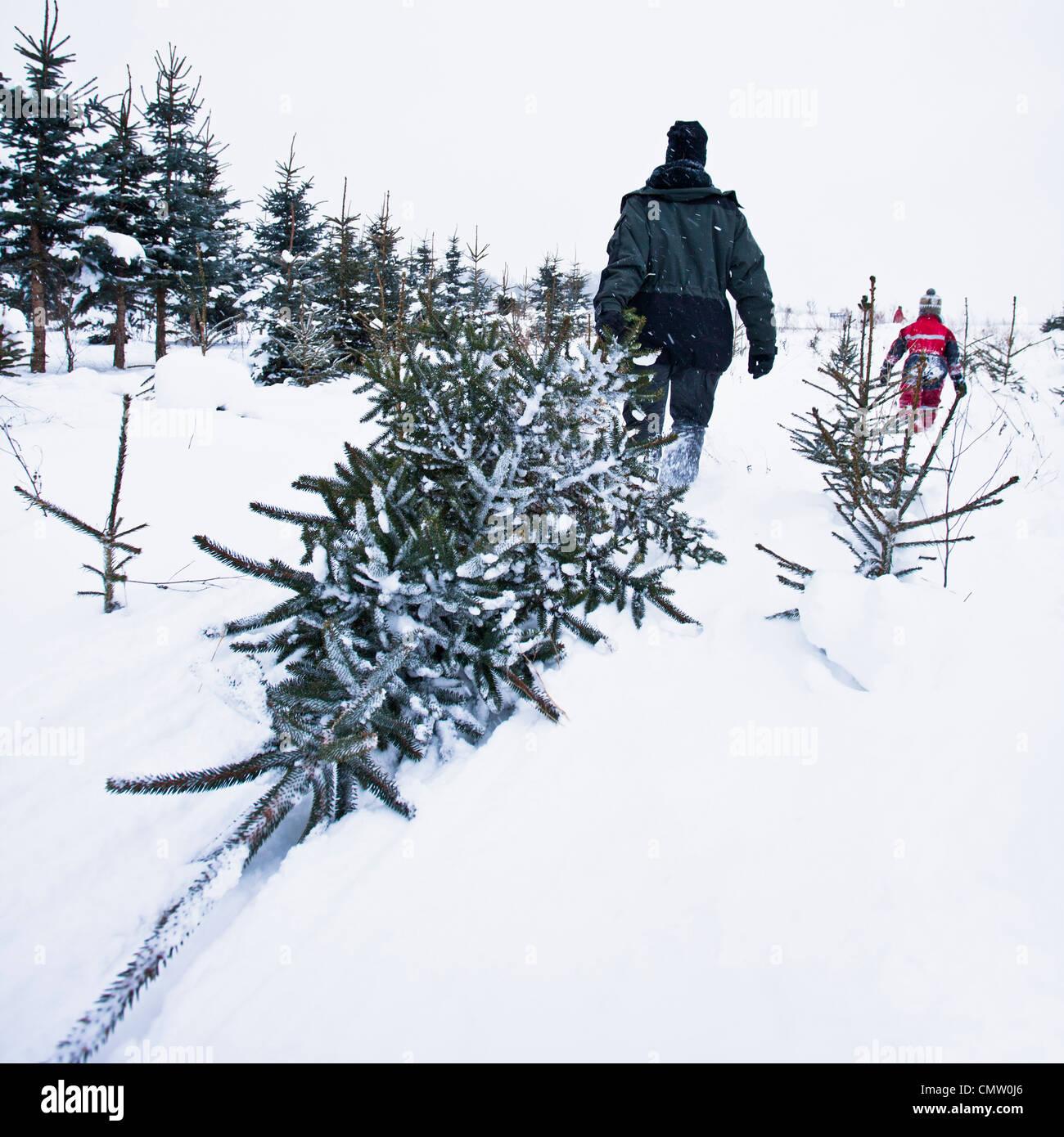 Person ziehen Weihnachtsbaum Stockfoto