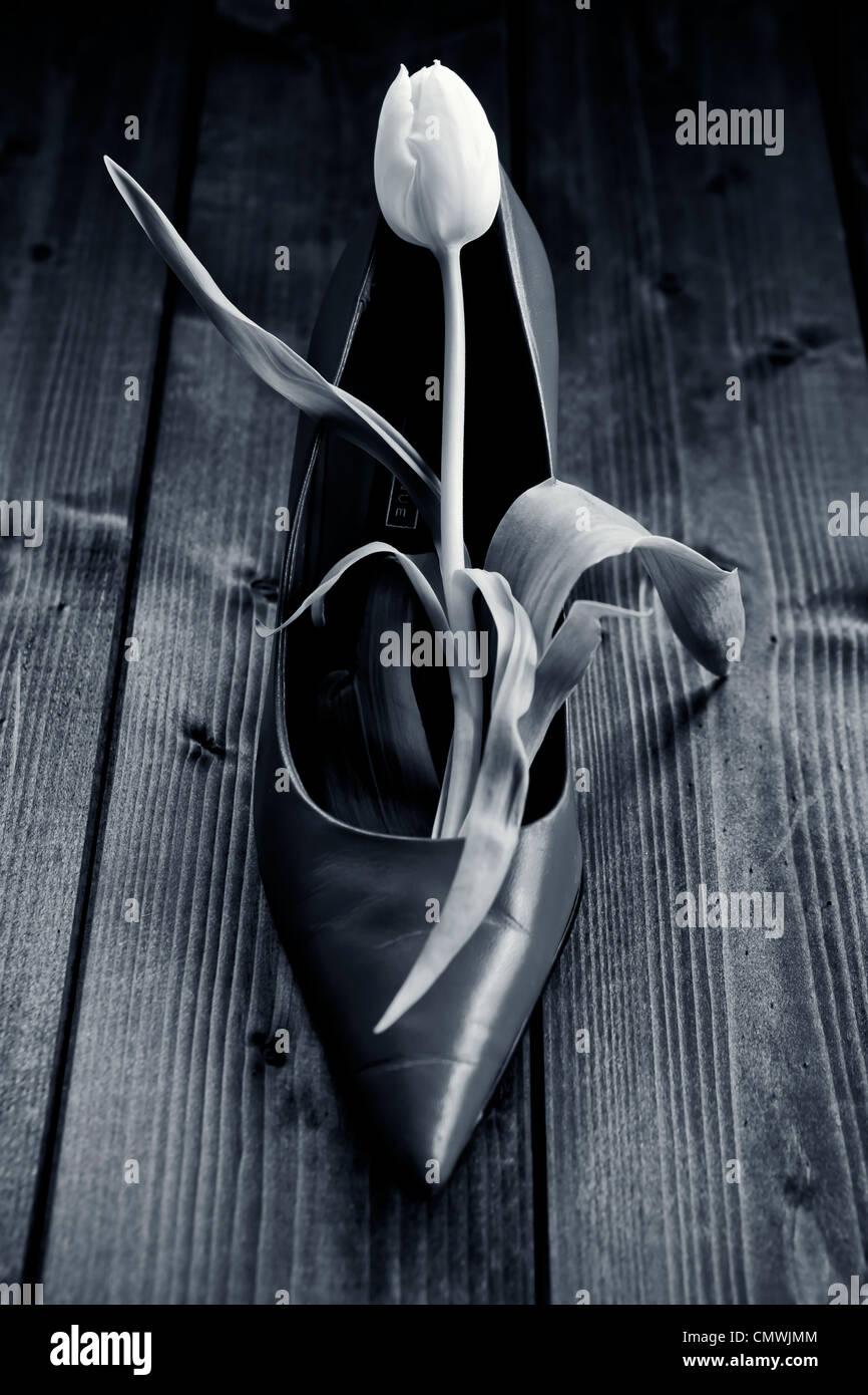 eine Tulpe in einem Schuh Stockbild