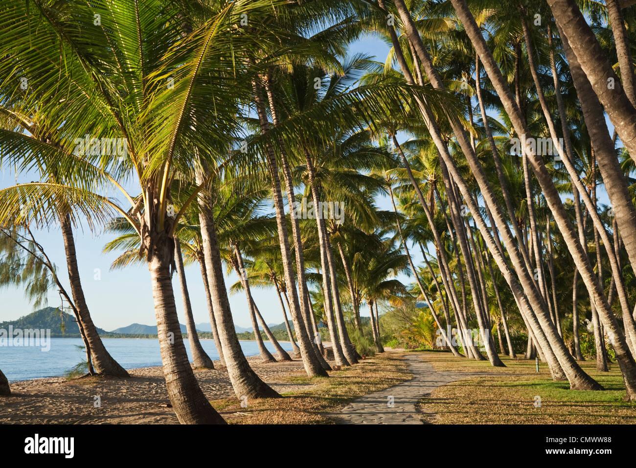 Kokos-Palmen am Strand von Palm Cove, Cairns, Queensland, Australien Stockbild