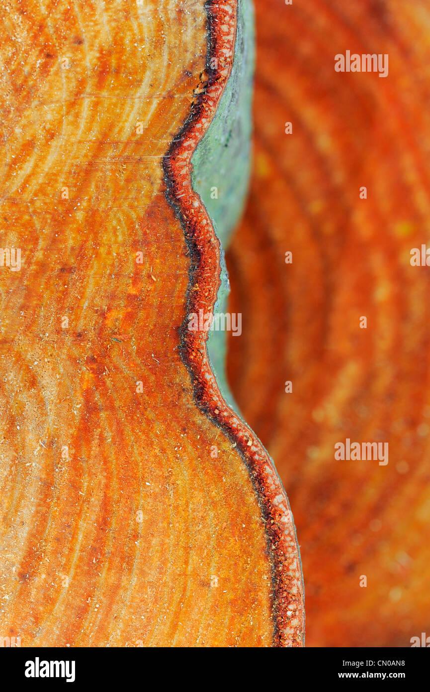 Jahrringe. Gesägten Baum-Stamm-Muster. Stockbild