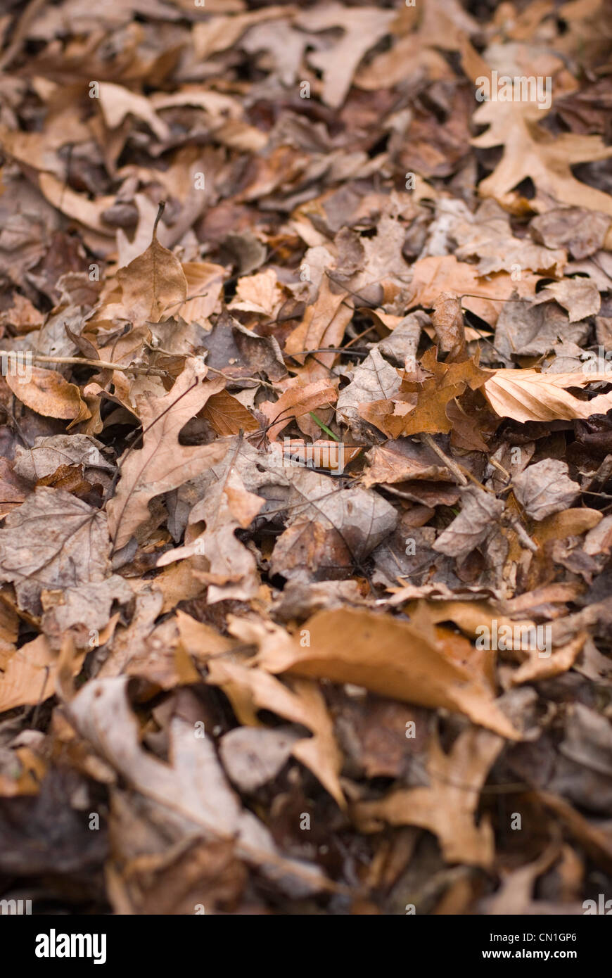 Gefallene Herbstlaub Stockbild