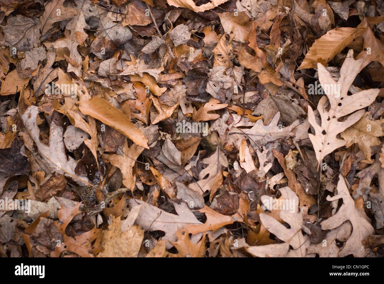 Im Herbst Laub III Stockbild
