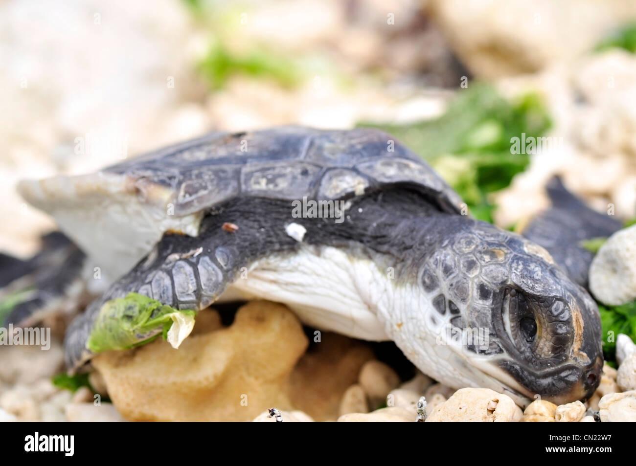Tolle Baby Schildkröte Malvorlagen Fotos - Malvorlagen Von Tieren ...