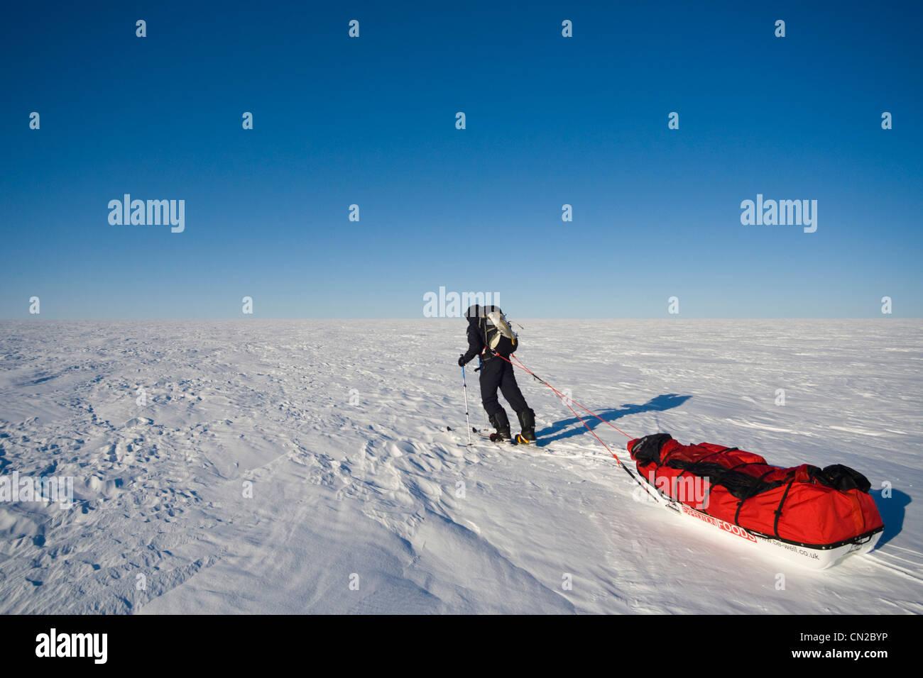 Polarforscher schleppen Schlitten, Grönland Stockbild