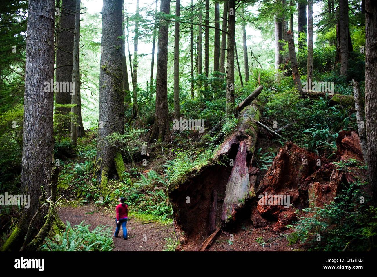 Frau zu Fuß durch Wald mit umgestürzten Baum Stockbild