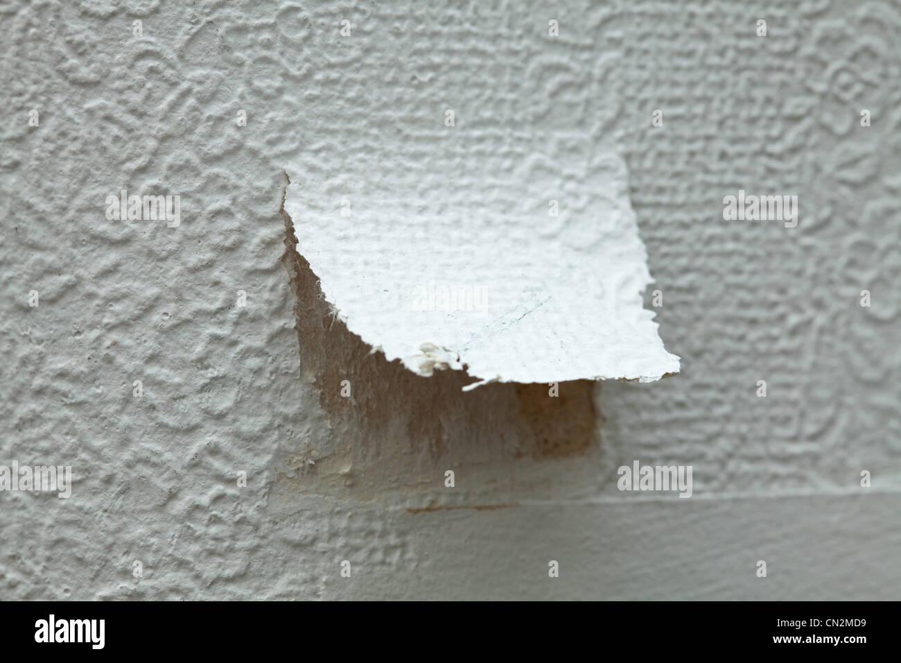 Zerrissene Tapeten Stockbild