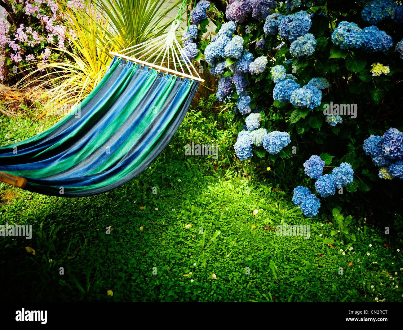 Sommer in Neuseeland: Blaue Hortensie, Hängematte und Rasen. Stockbild
