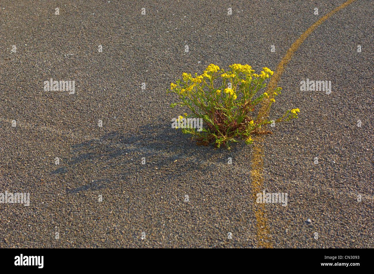 Pflanze wächst durch alten Schulhof Stockbild
