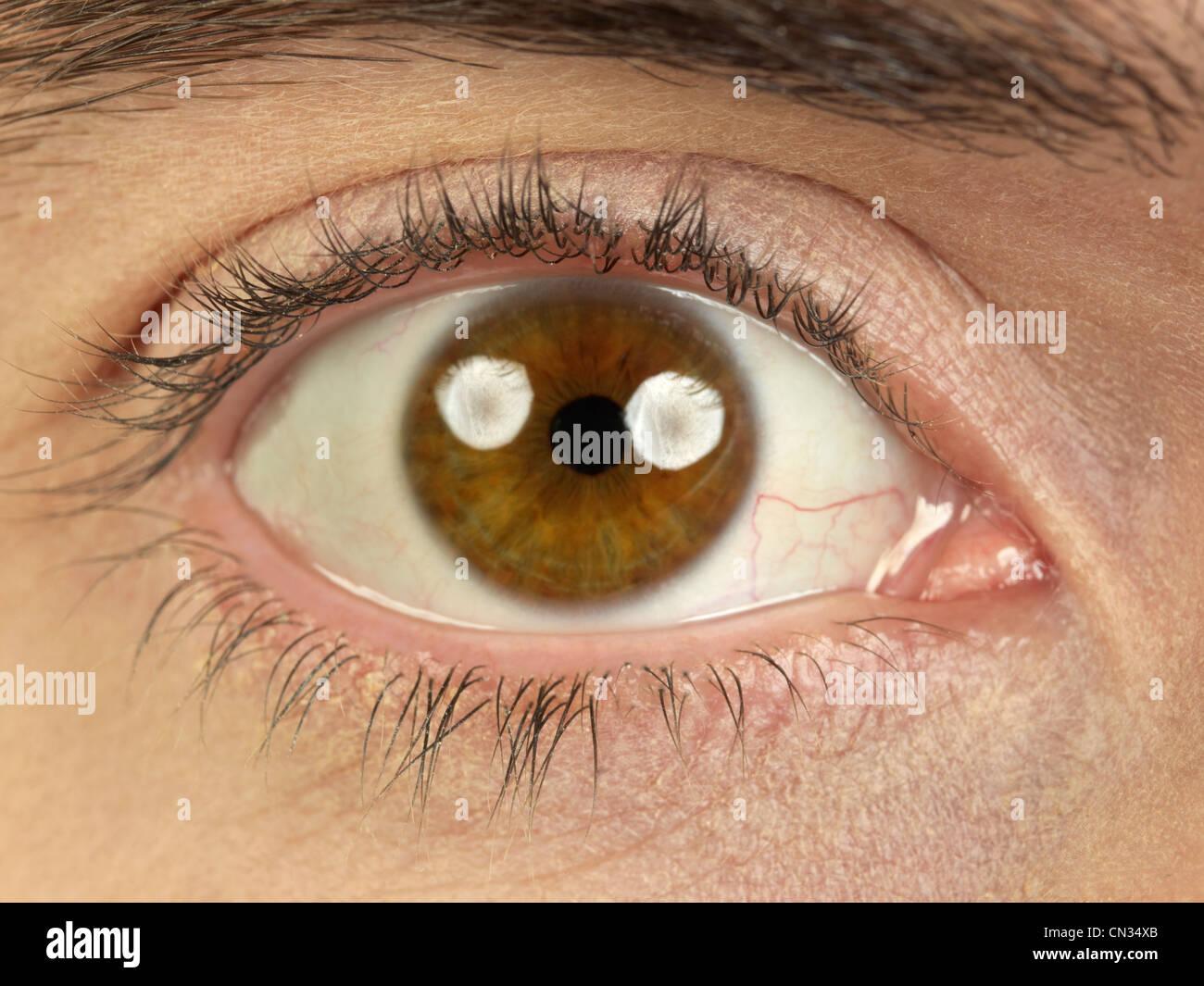 Braune Augen Stockbild