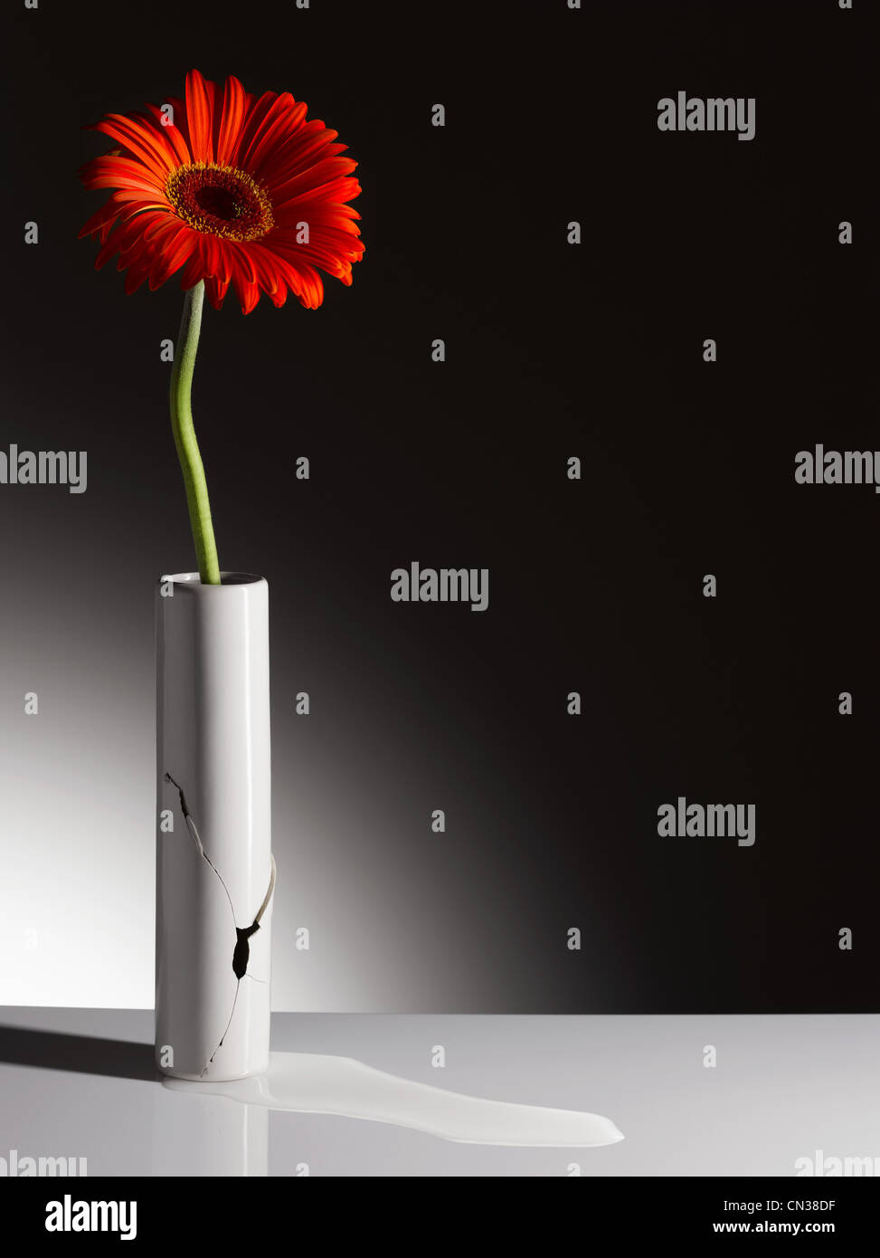 Rote Blume in zerbrochene vase Stockfoto