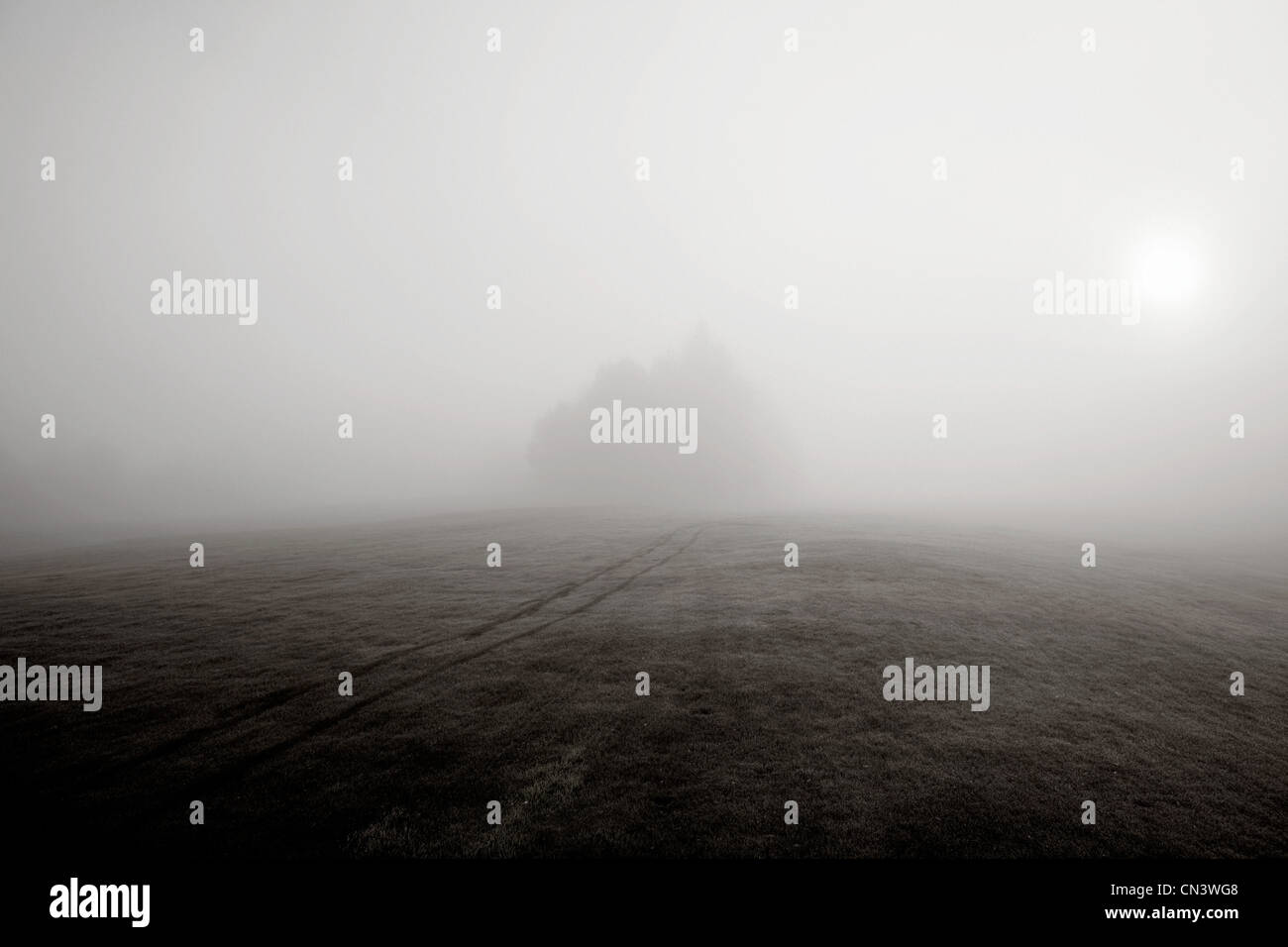 Nebel über Hügel und entfernte Bäume Stockbild