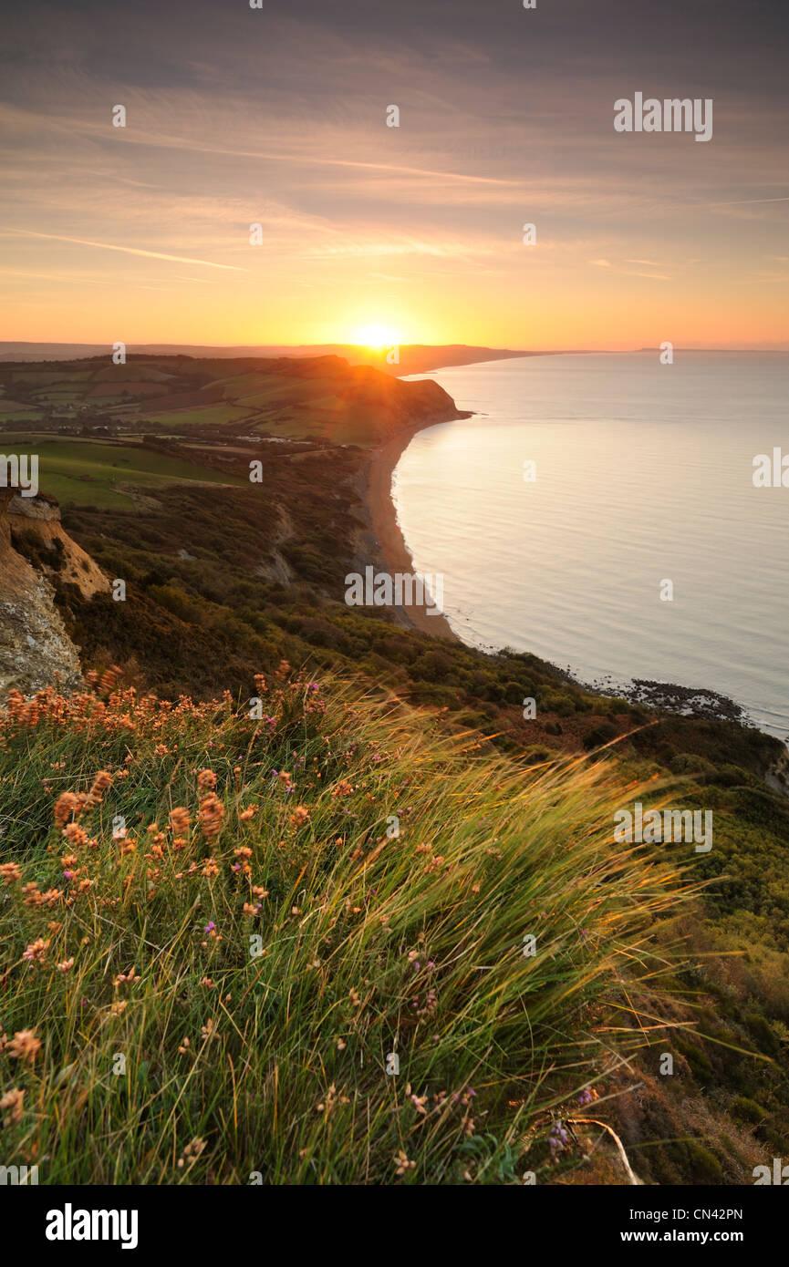 Windgepeitschten Rasen beleuchtet von der aufgehenden Sonne auf goldene Kappe auf den Jurassic Küste von Dorset. Stockbild