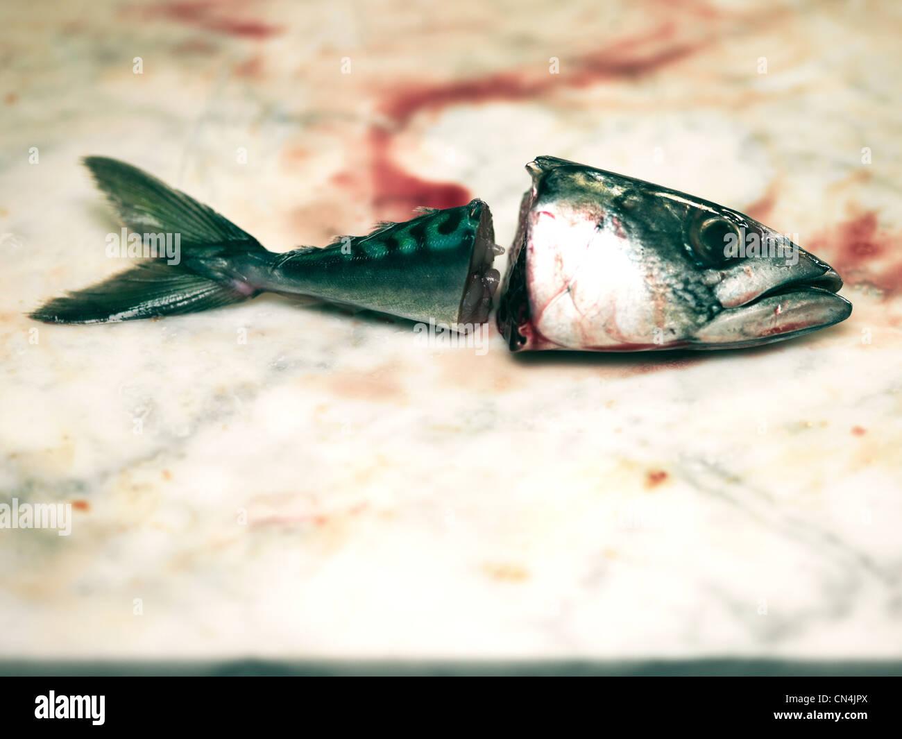 Kopf und Schweif von Fischen Stockbild