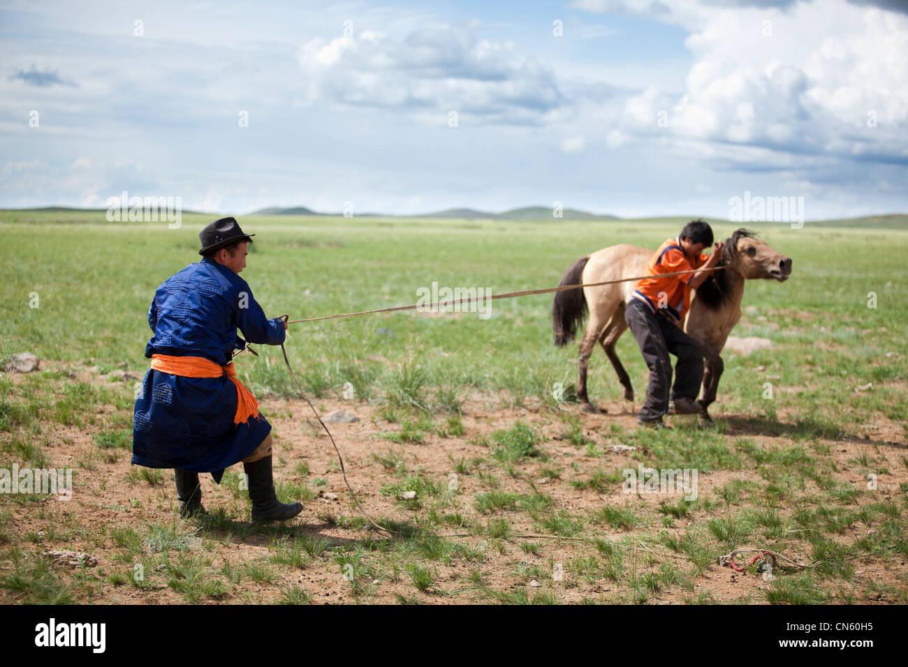 Zähmen Sie das Pferd auf der Steppe, Khuduu aral, Khentii Provinz, Mongolei Stockbild