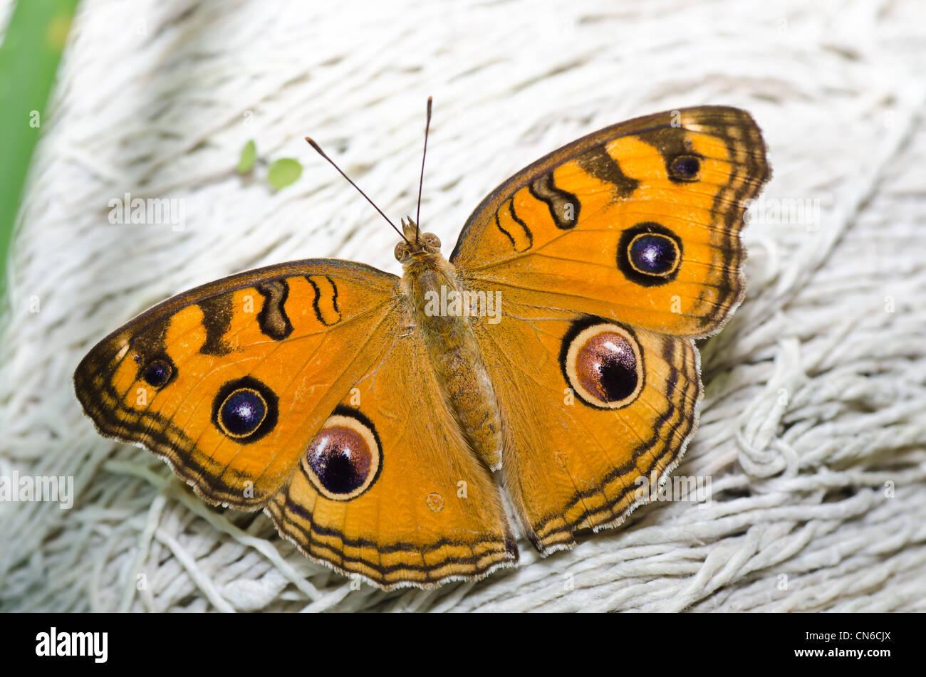 Schmetterling in grüner Natur oder im Garten Stockbild