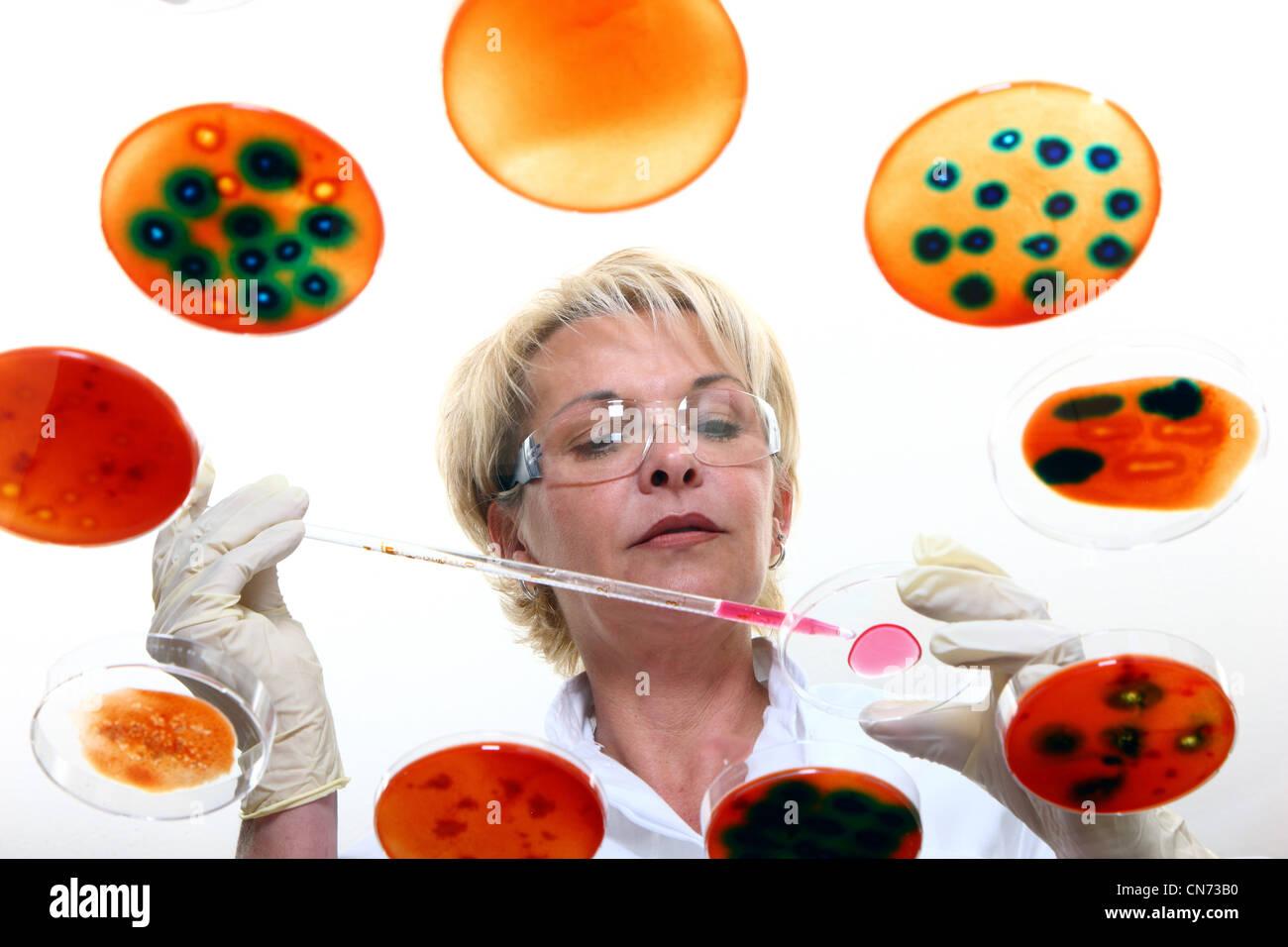 Labortechniker arbeiten im Labor mit Bakterienkulturen in Petrischalen. Durch einen Glastisch gesehen. Stockbild