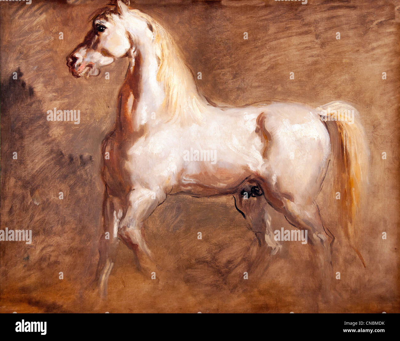 Cheval Blanc de Profil - White Horse in Profil - Theodore Chasseriau 1819-1856 Frankreich Französisch Stockbild