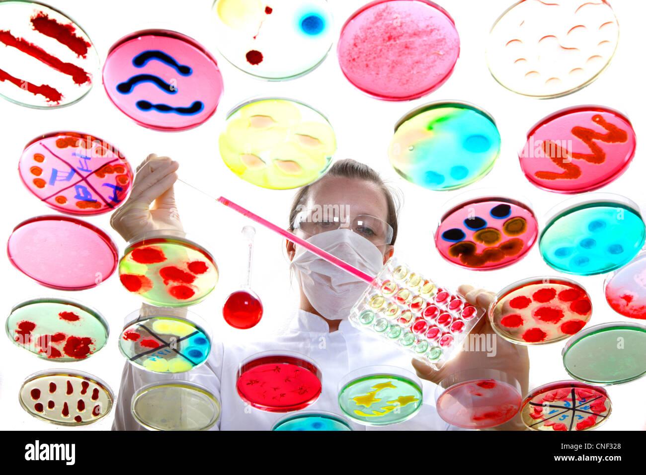 Labor, biologische, chemische. Analyse der bakteriellen Kulturen von Bakterien wachsen in Petrischalen. Stockbild