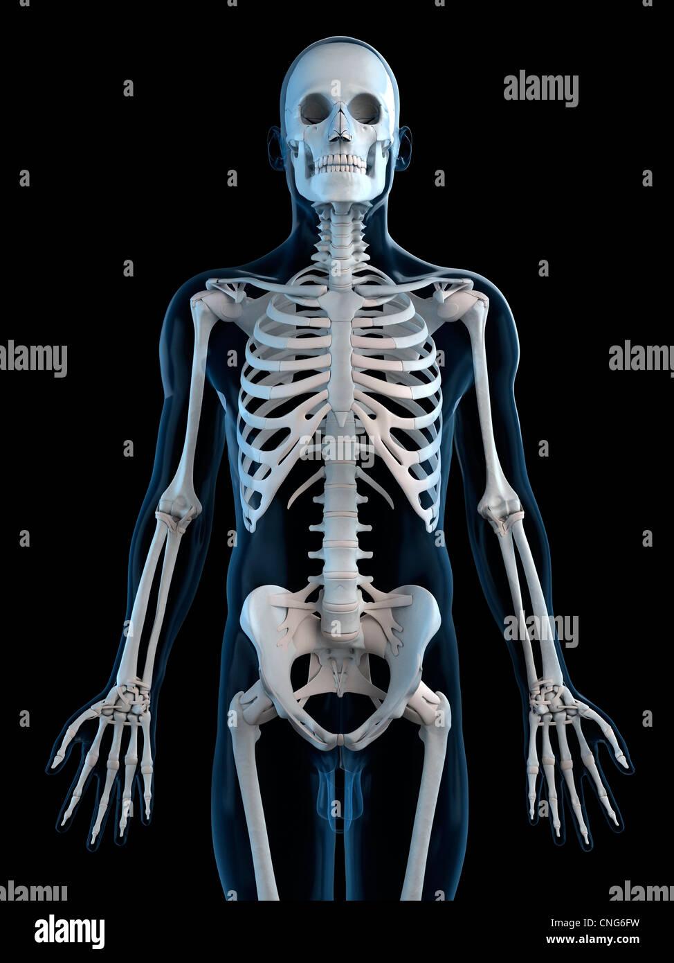 Ausgezeichnet Malvorlagen Zum Thema Menschliches Skelett Galerie ...