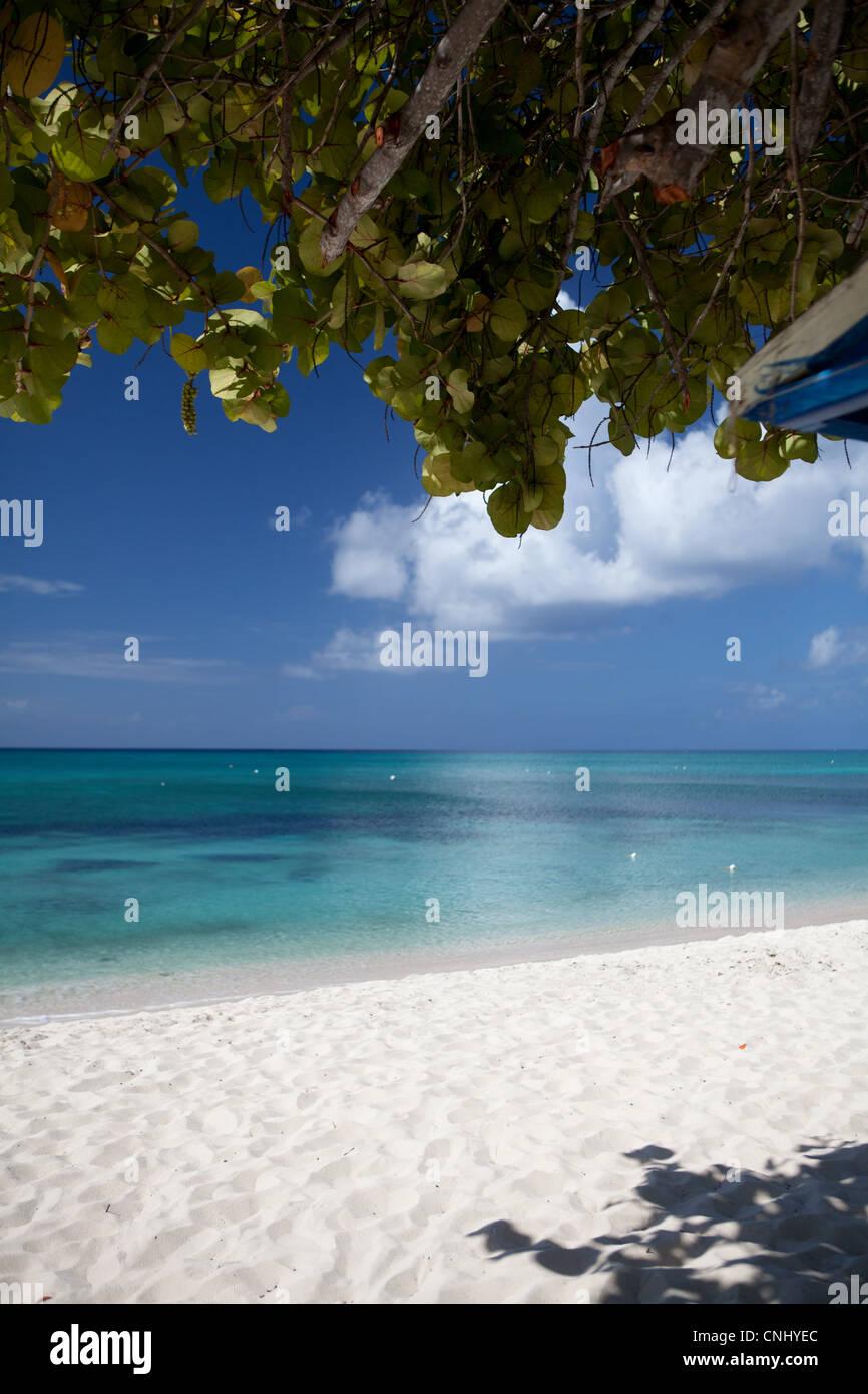 Strand und Meer, Karibik unter Baum, Grand Cayman, Cayman-Inseln Stockbild