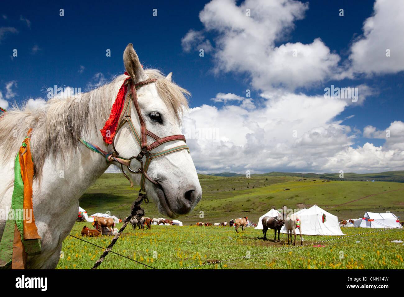 White Horse Festival geheimen Berg Tagong Bereich China Tibet Westasien Stockbild