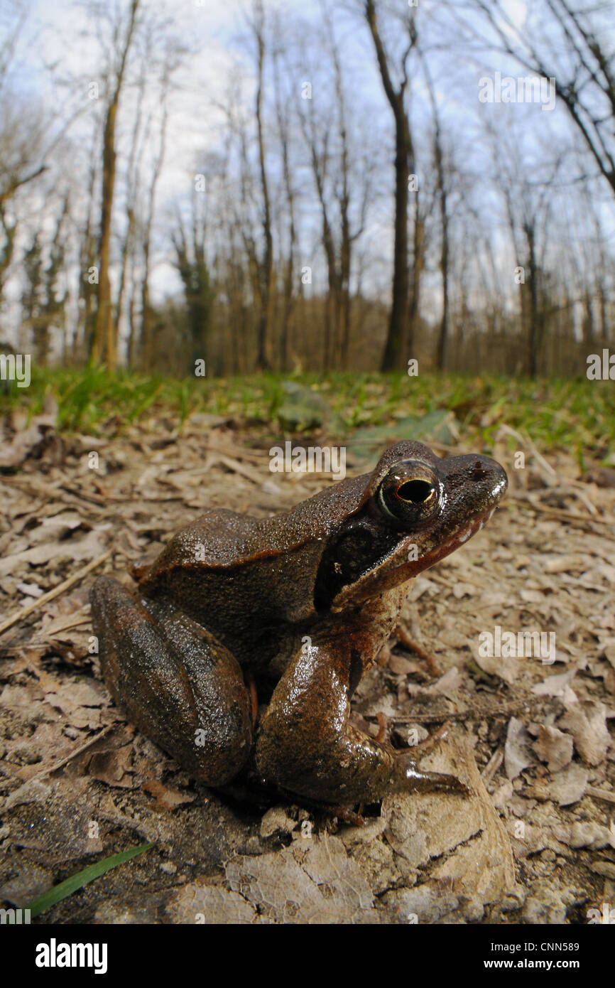 Frog Sitting On Ground Frogs Stockfotos & Frog Sitting On Ground ...