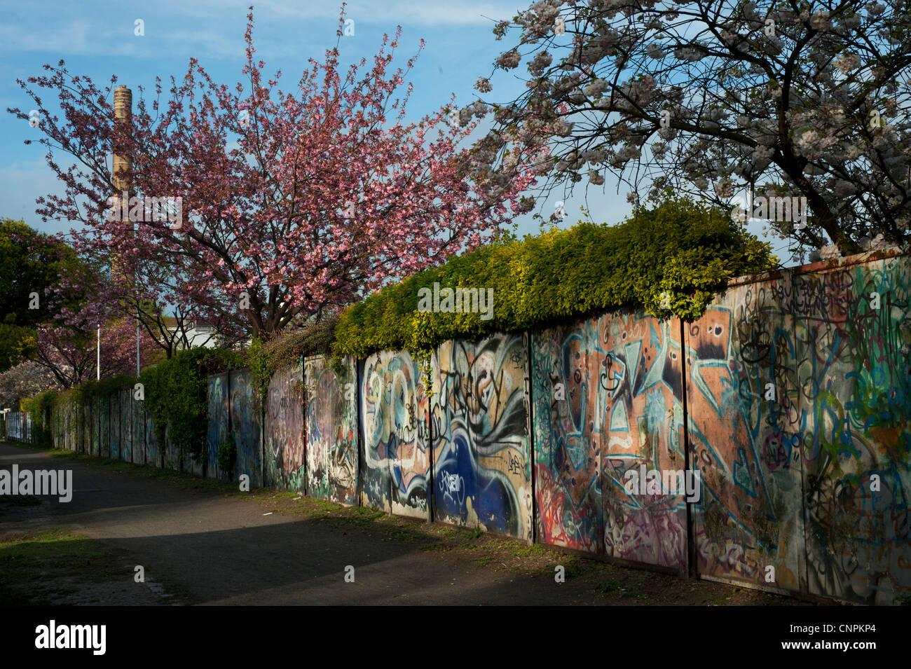 Fruhling In Berlin Neukolln Wand Mit Graffiti Und Einen Baum Mit