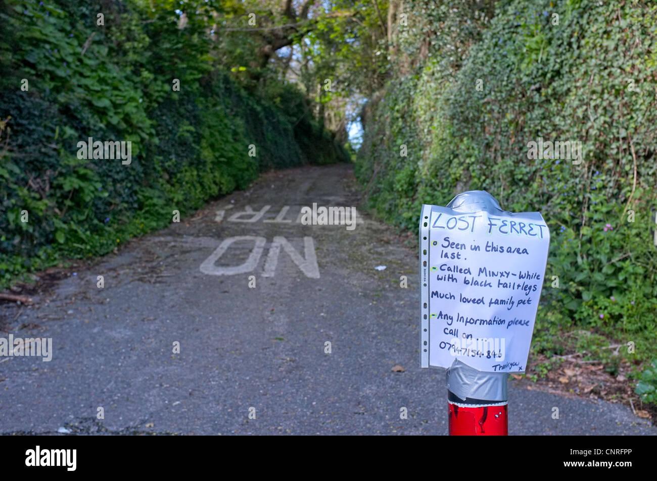 Ein Zeichen fordern eine Standortwahl eine verlorene Frettchen Stockbild