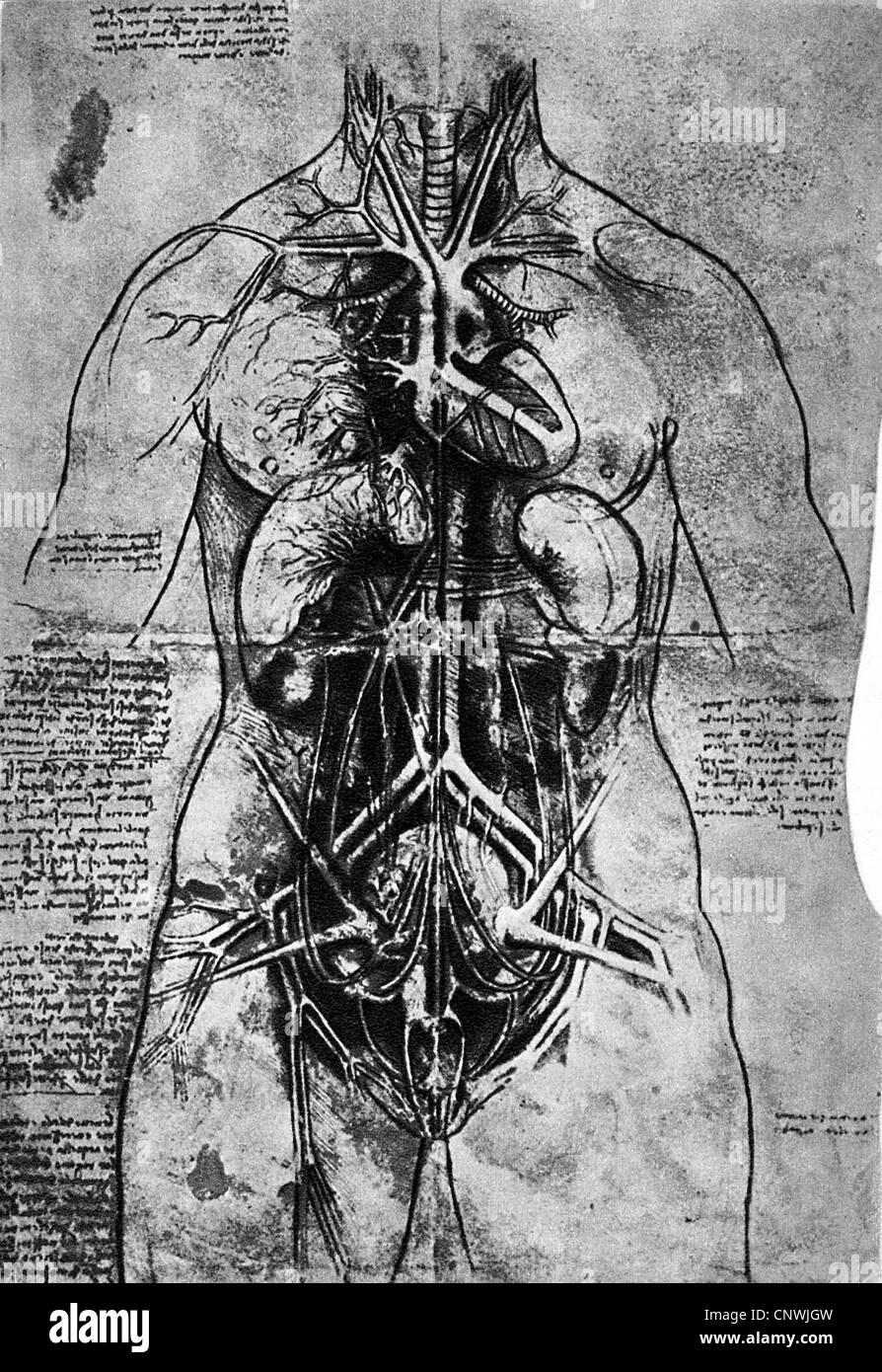 Bildende Kunst, Leonardo da Vinci (1452-1519), anatomische Studie ...
