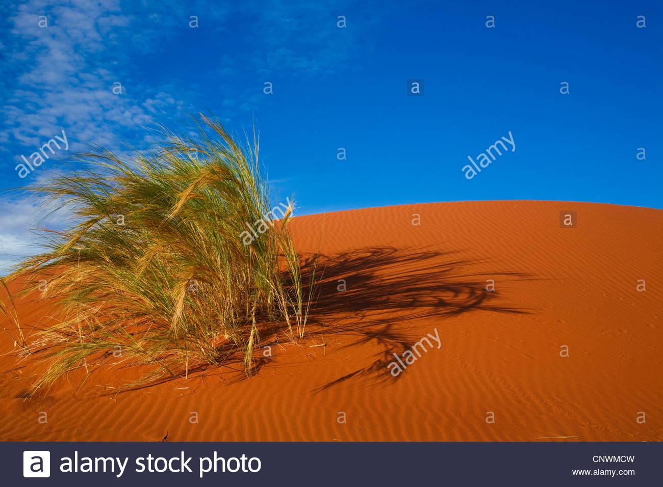 Dünengras im Namib-Wüste, Namibia, Namibrand Stockbild
