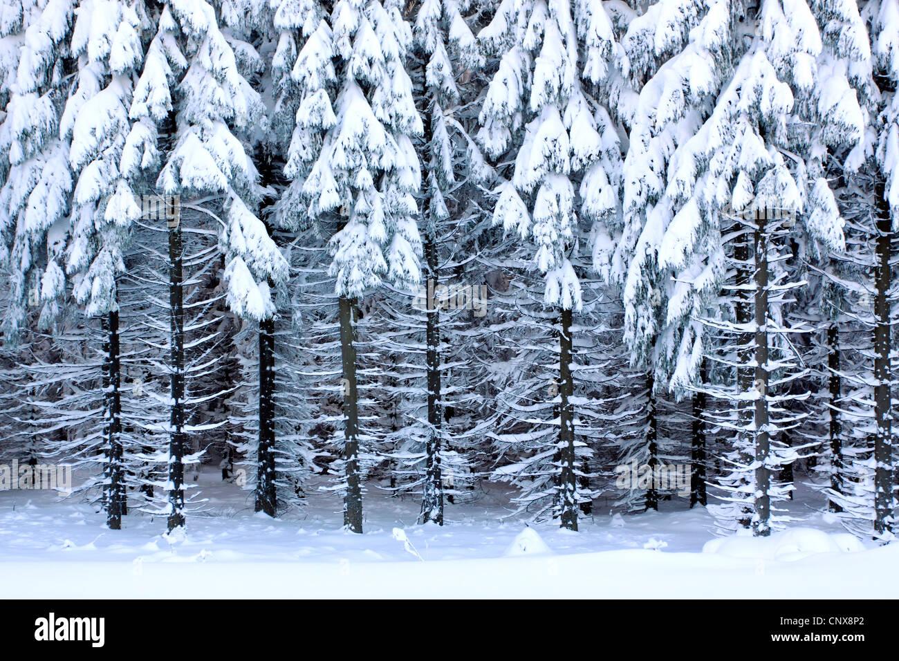 Winter im Erzgebirge 2016 - YouTube