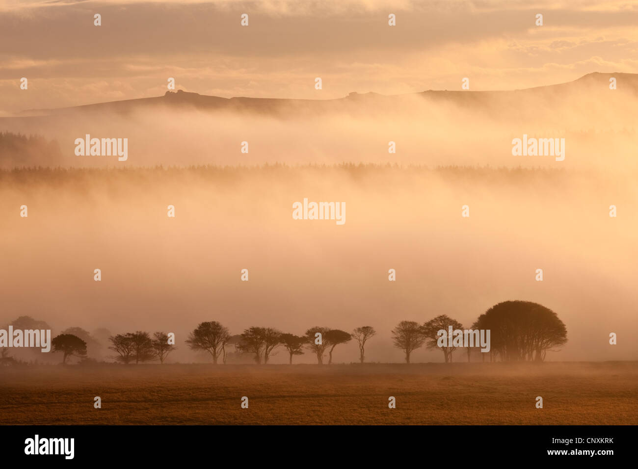 Nebel bedeckten Moor bei Sonnenaufgang, in der Nähe von Farbwerken, Dartmoor, Devon, England. Herbst (Oktober) 2011. Stockfoto