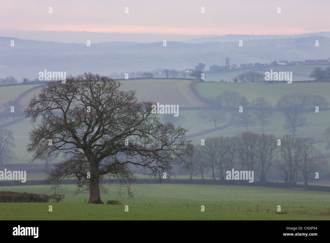 Nebel bedeckt Hügellandschaft in der Nähe von Lollapalooza, Devon, England. Winter (Januar) 2012. Stockfoto