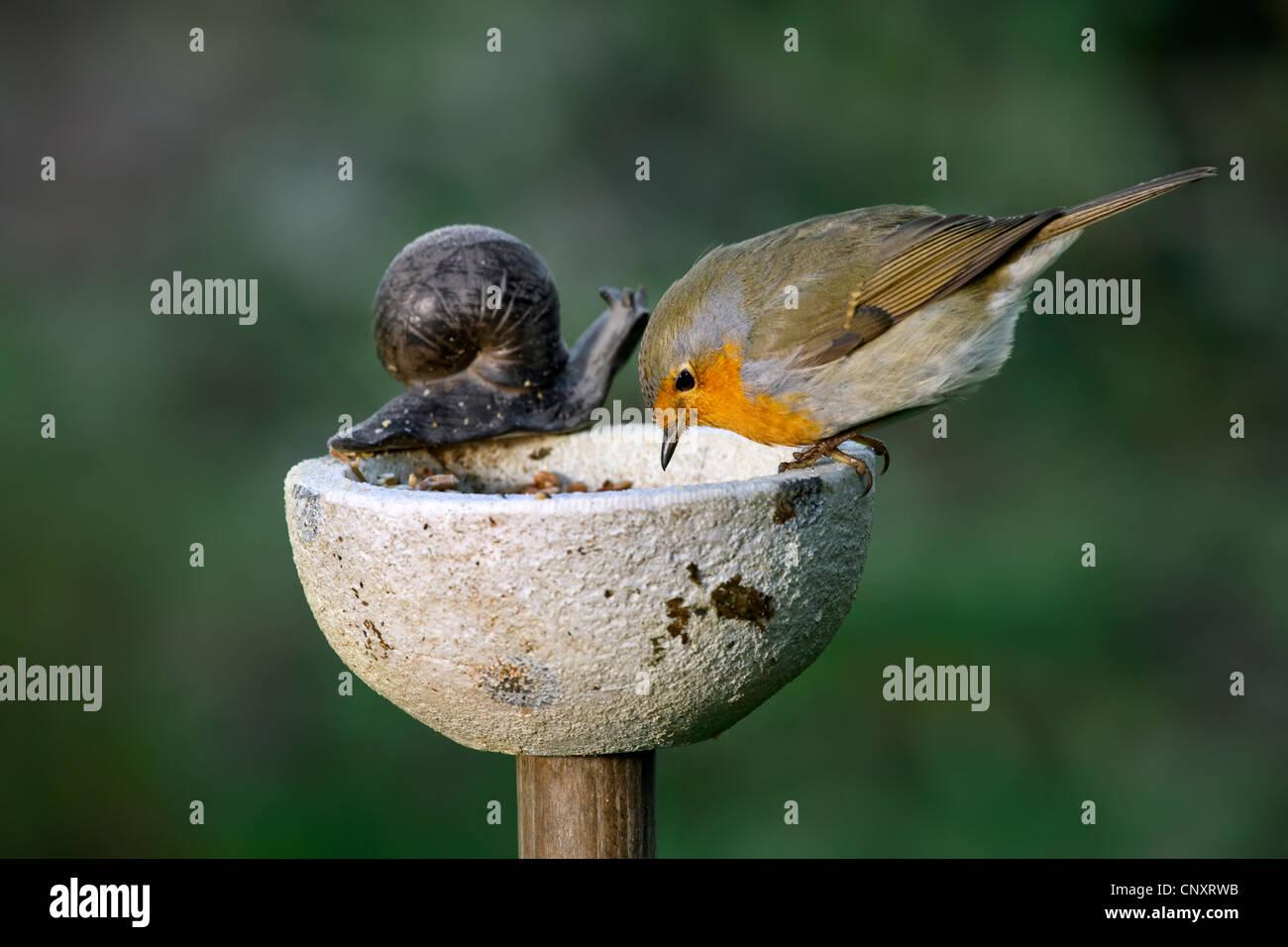 birds feeding bird table stockfotos birds feeding bird. Black Bedroom Furniture Sets. Home Design Ideas