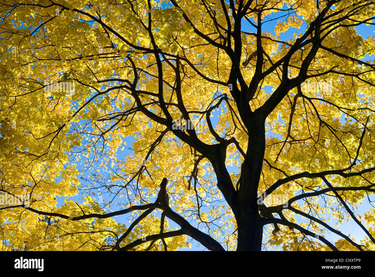 Blickte zu blättern und Herbstlaub im Herbst-Saison. Stockbild