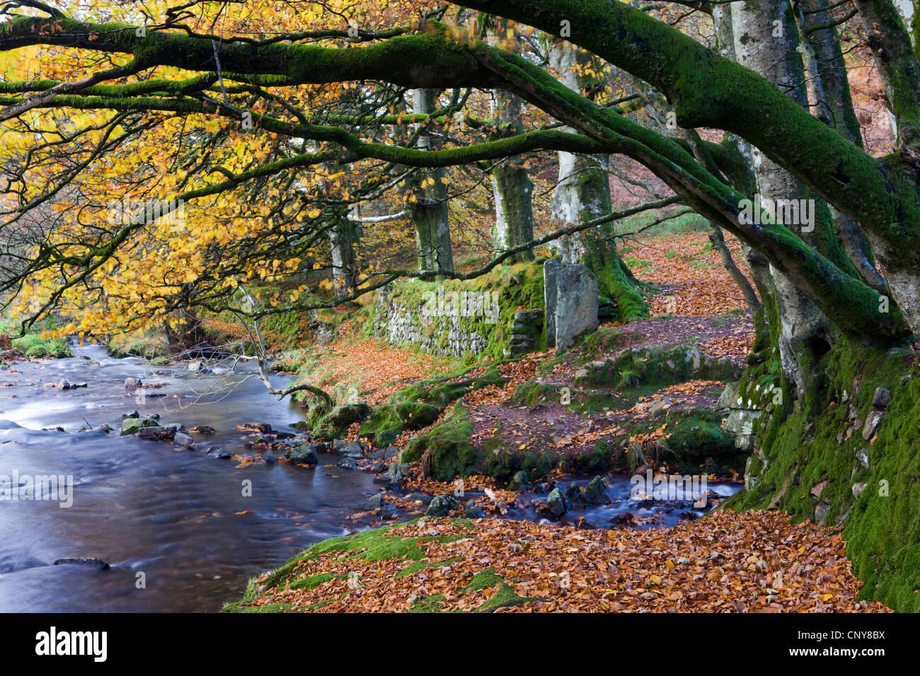 Herbstszenen neben Oare Wasser in der Nähe von Räubern Brücke, Exmoor National Park, Somerset, England Stockbild